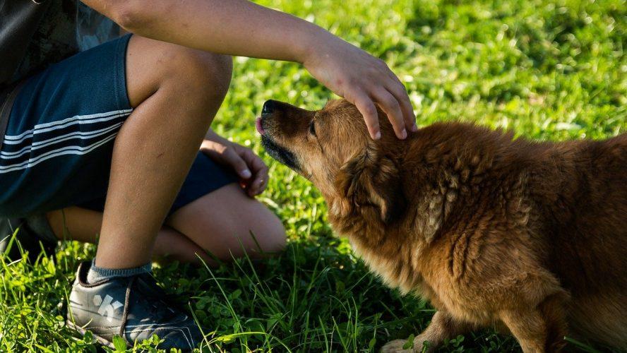 Un animal domestique pour tenir compagnie à votre enfant.